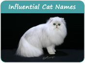 Influential Cat Names