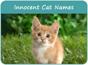 Innocent Cat Names