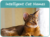 Intelligent Cat Names