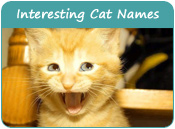 Interesting Cat Names