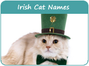 Irish Cat Names