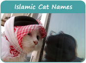 Islamic Cat Names