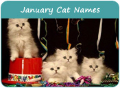 January Cat Names