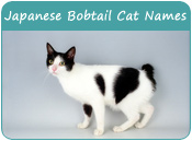 Japanese Bobtail Cat Names