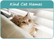 Kind Cat Names