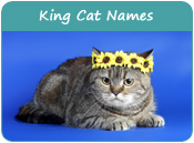 King Cat Names
