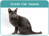 Korat Cat Names