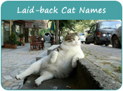 Laid-back Cat Names