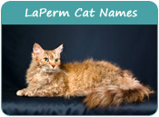 LaPerm Cat Names