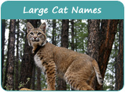 Large Cat Names