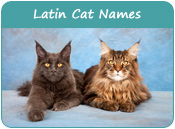 Latin Cat Names