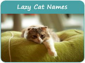 Lazy Cat Names