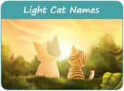 Light Cat Names