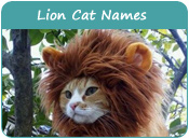 Lion Cat Names