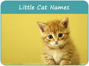 Little Cat Names
