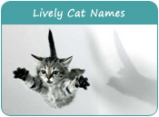 Lively Cat Names