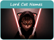 Lord Cat Names