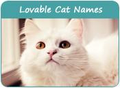 Lovable Cat Names