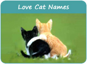 Love Cat Names