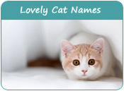 Lovely Cat Names