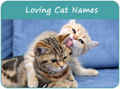 Loving Cat Names