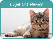 Loyal Cat Names