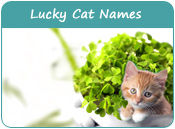 Lucky Cat Names