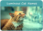 Luminous Cat Names