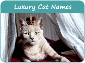 Luxury Cat Names