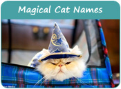 Magical Cat Names