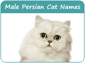 Male Persian Cat Names