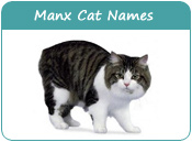 Manx Cat Names