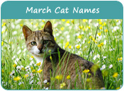 March Cat Names
