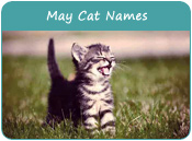 May Cat Names