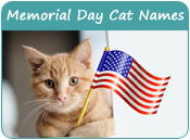 Memorial Day Cat Names