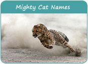 Mighty Cat Names