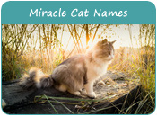 Miracle Cat Names