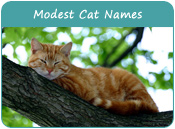 Modest Cat Names