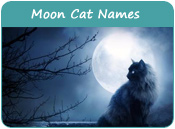 Moon Cat Names