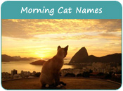 Morning Cat Names