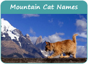 Mountain Cat Names