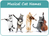 Musical Cat Names