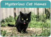 Mysterious Cat Names