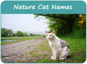 Nature Cat Names