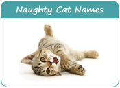 Naughty Cat Names