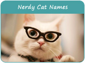 Nerdy Cat Names
