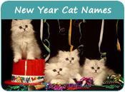 New Year Cat Names