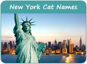 New York Cat Names