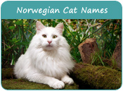 Norwegian Cat Names