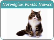 Norwegian Forest Cat Names